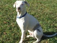 Catahoula Leopard Dog - Kali - Medium - Adult - Female
