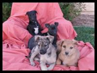 n: Catahoula Leopard Puppies re-homing to Good Homes