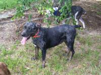 We have one female catahoula leopard dog for $180. She