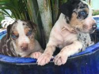 8 weeks Males and females Gorgeous puppies Calls only