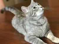 Catalina's story Catalina (dilute tabby female) Young I