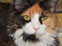Catalina Goby's story Why name a cat Catalina Goby? For