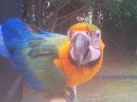 Neytiri, a beautiful Catalina Macaw, is looking for a