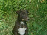 Three remaining Pups for sale.  One is Male, the