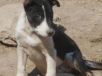 Up for adoption One female pup is left she is now her