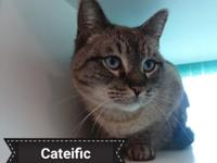 Looking for a terrific cat? Look no further than mister