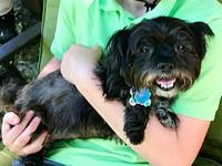 Cathy's story Cathy is a small female yorkie/shih tzu