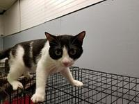Catis's story Catis is a sweet, fun-loving girl! She