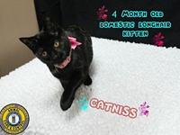 Catniss's story You can fill out an adoption