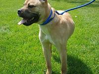 Cato's story IF YOU ARE INTERESTED IN ADOPTING THIS