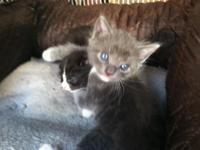 I have 3 kittens 5 weeks old, a cat who is 7 months old