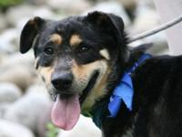Cattle Dog Bruce's adoption fee, typically $150, has