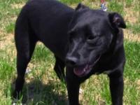 Cattle Dog - Katy-sweet! - Large - Adult - Female -