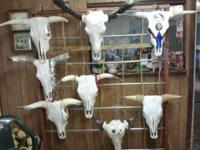 Cattle and Water buffalo skulls with horns. I have many