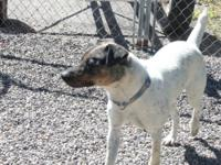 Cattle Dog - Gunner - Medium - Adult - Male - Dog Male