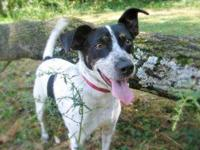 Cattle Dog - Willy -- Adoption Sponsored - Medium -