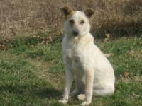 Cracker is a Cattledog X also called Heeler. She is a