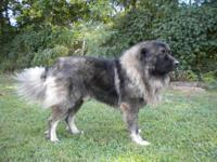 I am interested in purchasing 2 Caucasian Shepherd