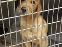 Adopting me today will save the life of two pets --