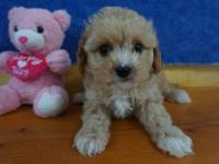 ADORABLE LITTLE ROXIE IS READY FOR HER NEW HOME. SHE