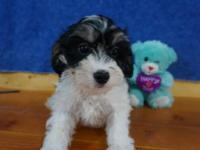 ADORABLE LITTLE OLIVER IS READY FOR HIS NEW HOME. HE