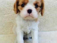 We invited a litter of five gorgeous, healthy tri-color