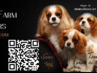 #Cavalier King Charles Spaniels of Rock Cliff. #