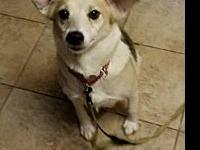 Cayman's story Meet Cayman! Cayman is a sweet girl who