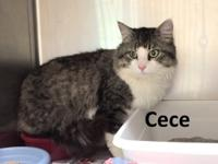 Meet Cece! He loves attention and to be petted. He