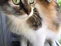 CeCe's story This beautiful kitty was found just before
