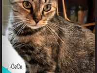 My story CeCe is a petite cat with a big, friendly