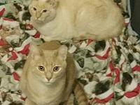 Cecil & Jerico (Courtesy Post)'s story Jericho, flame