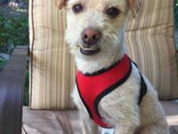 Cecil is a terrific little dog who was left at the