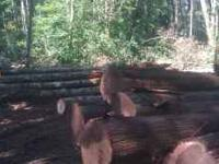 Selective logging company with over 40 years woods