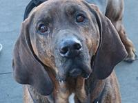 Cedar's story I am a 3 year old male hound mix. I am
