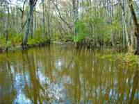 Cobb Creek is 70+/- acres situated in southern Toombs