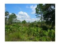 Private timber/hunting tract 10 miles east of Cedar Key
