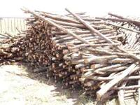 Cedar Stays for fencing 1.75 each  Location: Lubbock