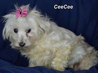 CeeCee's story Please contact Constance