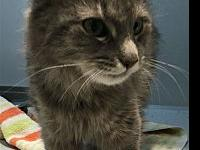 Celene Dion's story Primary Color: Grey Tabby Weight: