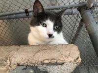 Celeste's story Celeste arrived at the shelter recently