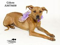 Celeste's story All dogs in the adoption program are
