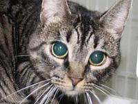 My story Celia is a wonderful and affectionate cat. She