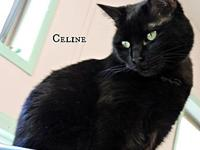 Celine's story Celine hid under the shelter beds in the