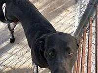 Cephus's story Cephus was brought in to CHS as a stray