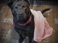 Cera's story Cera is a female ChowChow/Lab Mix born