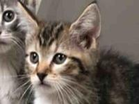 My story Adopt this sweet and outgoing kitten at the