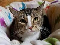 Cersei's story Cersei is a young adult cat looking for