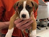 Ceviche's story Ceviche is an 8 week old mixed breed!
