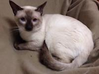We are looking to rehome some of our older Siamese